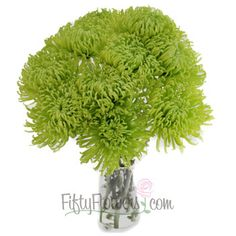FiftyFlowers.com - Anastasia Spider Green Flowers