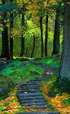Amazing Views of Sun - Enchanting forest path