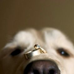 Stop it. Too cute! Great way to include a pet in your wedding day.