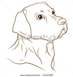 A beautiful vector illustration of a labrador retriever dog - stock vector