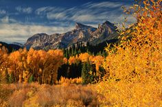 Colorado Fall Colors; photograph by Rob Younger. Cottonwoods, aspens and strange cloud formations