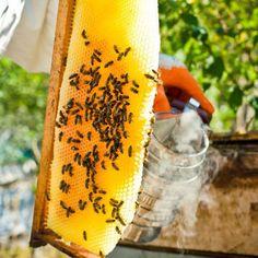 cette impressionnante vid o r sume la vie des abeilles dans une ruche de la formation de la. Black Bedroom Furniture Sets. Home Design Ideas
