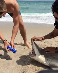 Spring break with a side order of wildlife harassment | wtf | Earth Touch News