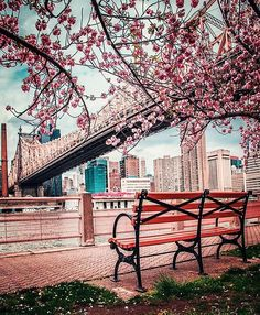 Spring NYC . . #nyc