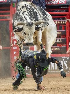 **OPEN RP** Jackson headed to a local rodeo and ended up drawing a bull named Bone Collector. He was standing behind the chutes when you walked over/saw him from the stands. Cowboy Horse, Cowboy Art, Cowboy And Cowgirl, Cowboy Pics, Rodeo Cowboys, Real Cowboys, Bucking Bulls, Rodeo Events, Professional Bull Riders