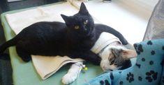 """So etwas Außergewöhnliches haben die Menschen in der Klinik gesehen und sind begeistert von ihrem """"tierischen Tierpfleger"""". Inzwischen ist Radamenes in seinem"""