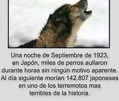 El Gran terremoto de Kantō azotó la región de Kanto en la isla japonesa de Honshu a las 11:58 del 1 de septiembre de 1923. El sismo tuvo una magnitud de 7,8 en la escala sismológica de Richter. Destruyó la ciudad portuaria de Yokohama así como las prefecturas vecinas de Chiba, Kanagawa, Shizuoka y Tokio.