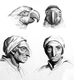 Baroque-Era Drawings Reveal Early Ideas About Evolution