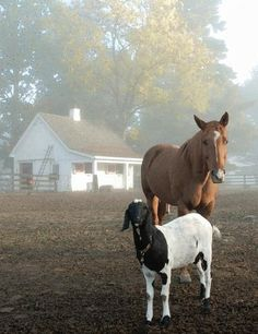 Love this picture of Lerory (the horse) and Jerry (the goat)