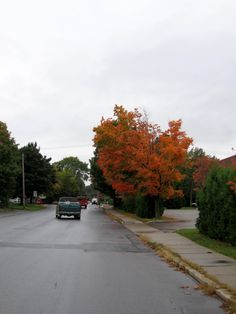 Small maple tree in Bennington, Vermont, September 29, 2012