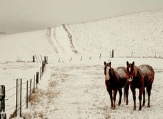 two of my favorite things in the world, snow and horses. <3