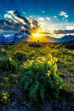 tulipnight: Golden Light at Grand Teton by bern.harrison on Flickr.