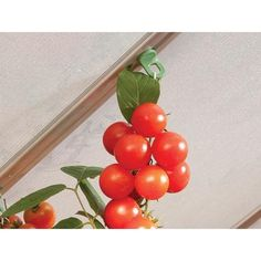 Palram Applications - Style your outdoor living Hanger Hooks, Plant Hangers, Aluminium Greenhouse, Hanging Baskets, Irrigation, Outdoor Living, Canning, Greenhouses, Vegetables
