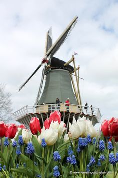 Springtime in Holland A spring visit to Keukenhof Gardens in the Netherlands should be on every flower lover's to-do list. Here's how to plan the perfect day trip from Amsterdam. Holland Country, Day Trips From Amsterdam, Holland Windmills, Amsterdam Netherlands, Travel Netherlands, 17th Century Art, Little Gardens, World Of Color, Wedding Humor
