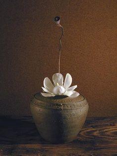 「あのハスみたいな花が咲いてる木は何?」指さされたのは満開の白モクレン。モクレンがハスに似てると思ったことは無かったが、木蓮の花は人によっては蓮の花のよう...