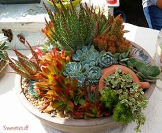 Sweetstuff& Sassy Succulents: Succulent Celebration Was Fantastic Types Of Succulents, Succulents In Containers, Cacti And Succulents, Container Plants, Planting Succulents, Container Gardening, Cactus Planta, Succulent Gardening, Succulent Ideas
