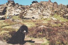 Alfie on a climb with us up the roaches