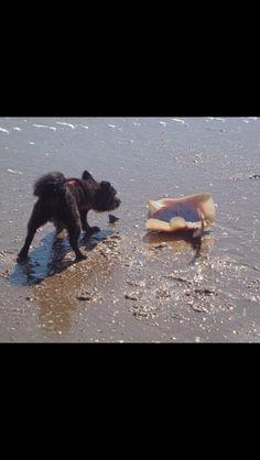 Brodee loves surf fishing on Ocracoke.  Maureen Ciancio