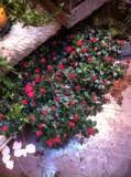 vanne asalea Stepping Stones, Outdoor Decor, Plants, Home Decor, Stair Risers, Decoration Home, Room Decor, Plant, Home Interior Design