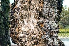 A tree Firewood, My Photos, Plants, Flora, Plant, Wood Fuel, Planting