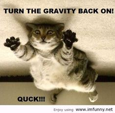 Cute Animals With Funny Sayingscute Animal Pics With Funny Sayings Wallpapers Qkonri