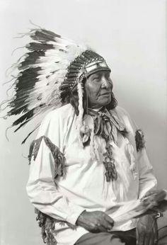 Chief yellowcalf