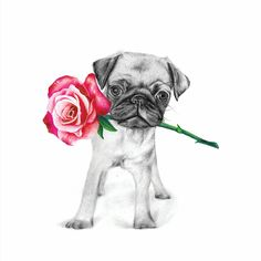 Polly the Pug from Green Door Decor by McMurtrie Illustrations Vellum Paper, Australian Artists, Botanical Art, Pugs, Knight, Kitten, Art Prints, Animals, Illustrations