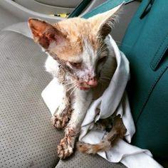 Une noble action pour le sauvetage de ce pauvre chaton qui prouve que les humains ne sont pas tous des salauds de brutes ! Bravo !...