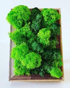 with lichens- photo frame Herbs, Frame, Handmade, Home Decor, Homemade Home Decor, Hand Made, Herb, A Frame, Craft