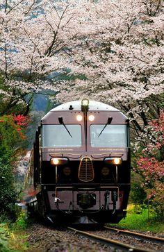 Electric Locomotive, Diesel Locomotive, Train Tracks, Train Rides, Motor A Vapor, Japan Tourism, Spring Scenery, Japan Train, Rail Transport