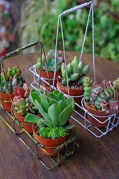 succulents in baskets