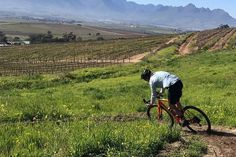 The Best Wine Farms For Mountain Biking In The Cape Mtb Trails, Mountain Bike Trails, Bike Parking, Table Mountain, Nature Reserve, Day Tours, Trail Running, Cape Town, Dog Friends