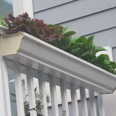 Gutter Garden - recycled, space saving...  Love it.