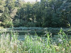 Die folgende Liste enthält benannte Seen und andere Stillgewässer im Kanton Thurgau. Siehe auch…