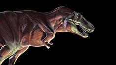 dinosaur anatomy - Buscar con Google