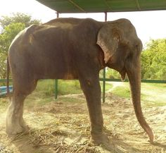 Raju after bath
