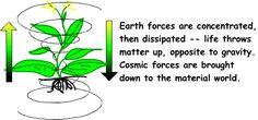 The Biodynamic Materials