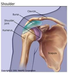 What Is Bursitis? Bursitis is the inflammation or irritation of the bursa. The bursa is a sac filled with lubricating fluid located between tissues such as bone muscle tendons and skin that decreases rubbing friction and irritation. Shoulder Rehab, Shoulder Joint, Bursitis Shoulder, Yoga Anatomy, Psoas Muscle, Rotator Cuff, Anatomy And Physiology, Massage Therapy, Physical Therapy