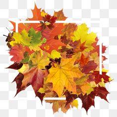 Autum Leaves, Red Leaves, Paper Background, Background Images, Leaf Border, Orange Leaf, Autumn Forest, Clipart Images, Seasonal Decor