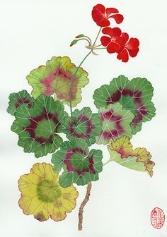 Geranium I by Gabby MALPAS | PLATFORMstore | Watercolour, Pencil, and Gouache on Arches Paper