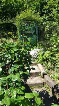 #spring garden #green garden