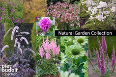 Planting Plan, Natural Garden, Dream Garden, How To Plan, Nature, Advice, Gardening, Google, Collection