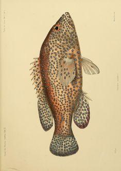 Bd.2, Hft.3,5,7,9 (1.873 à 1.875) - Journal des Musée Godeffroy. - Biodiversity Heritage Library