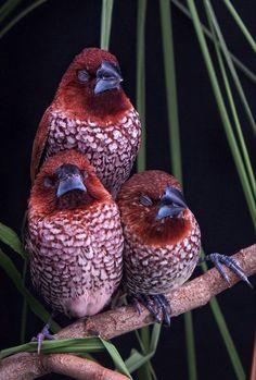 Kinds Of Birds, All Birds, Little Birds, Love Birds, Angry Birds, Pretty Birds, Beautiful Birds, Animals Beautiful, Gorgeous Gorgeous