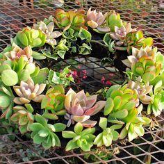 "Mountain Crest Gardens - Wreath Form - 12"" Reusable Black Plastic, $18.99 (http://mountaincrestgardens.com/wreath-form-12-reusable-black-plastic/)"