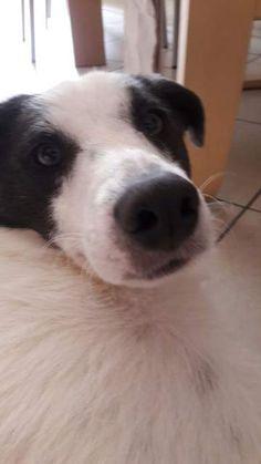 Cucciolo di cane si regala
