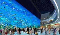 The Second Largest Okinawa Churaumi Aquarium in Japan. | See More Pictures | #SeeMorePictures