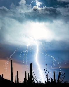 Lightning strike through the clouds during monsoon in Saguaro National Park. Tornados, Thunderstorms, Lighting Storm, Thunder And Lighting, Sean Parker, Lightning Photography, Centella, Strange Weather, Cloud Lights