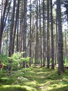 Jaw-dropping Maine.   15. Allagash Wilderness & Waterway.