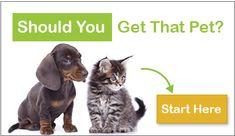 Pet Care Guides & Resource Information Aquarium Supplies, Pet Home, Little Pets, Aquarium Fish, Cats, Shop, Animals, Design, Gatos